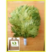 Веник из канадского дуба отборный Экстра, в упаковке, от 1 до 10 штук, цена от 300 до 270 рублей