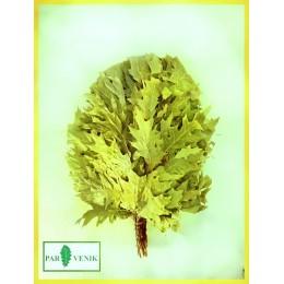 Веник из канадского дуба отборный, без упаковке, в коробке, от 10 до 30 штук, цена от 195 до 180 рублей