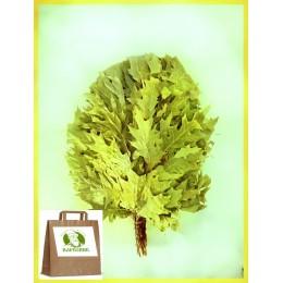 Веник из канадского дуба отборный в упаковке, 5+1 в подарок.
