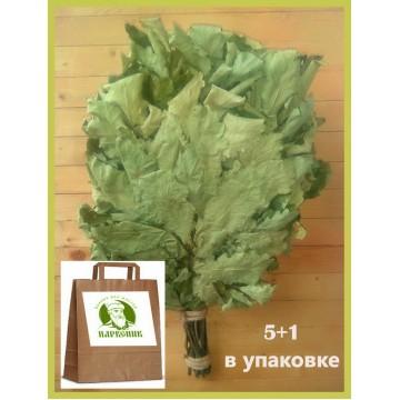 Веник дубовый  отборный кавказский из поросли, 2021 года  в упаковке,  5+1 в подарок.
