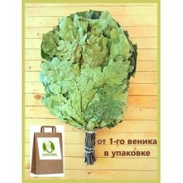 Веник из канадского дуба отборный 2020 года, в упаковке,  от 1 до 10 штук, цена от 265 до 240 рублей